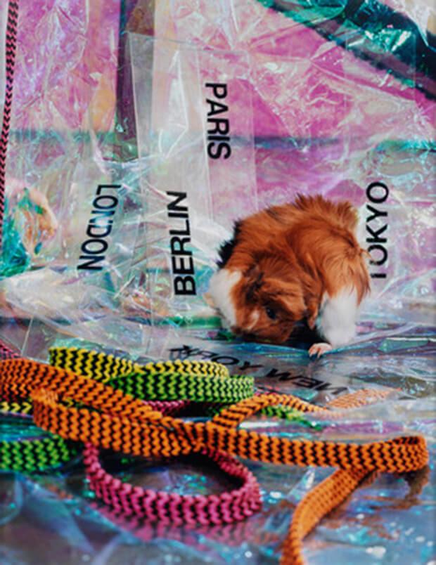 Josephine Pryde. Stampa cromogenica a  colori. 2012