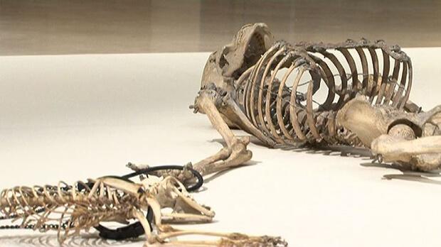 """Eliseo Mattiacci. Uno scheletro """"sbagliato"""""""