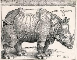 Rinoceronte di Albrecht Durer 1515
