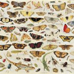 Jan van Kessel il Vecchio. Ampio studio di farfalle, insetti e conchiglie, 1671. Olio su tavola, cm. 45,8 × 66,3. Collezione privata